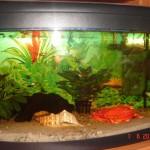 72. rybki, to kolejni domownicy, którzy zamieszkali w naszym mieszkanku